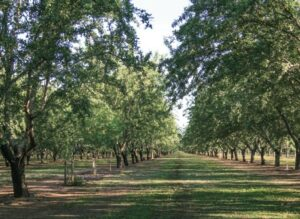 Almond farmers have reduced the amount of water needed to grow a pound of almonds by one-third in the past 20 years.