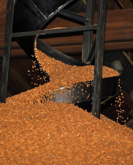 Almonds cascade down a chute at Blue Diamond Growers' bulk warehouse in Salida. BRIAN RAMSAY — Modesto Bee file Buy Photo
